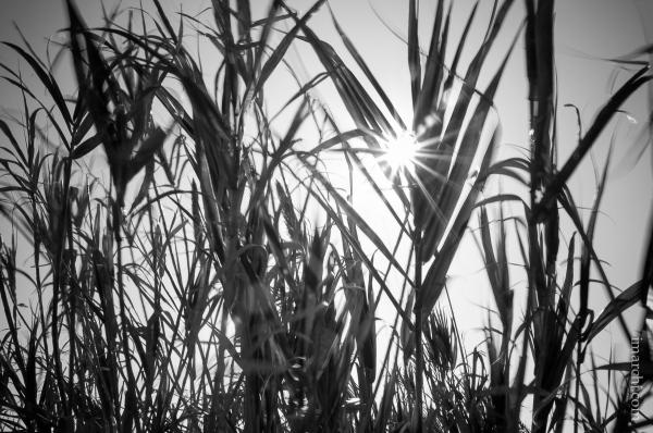 Sol y Brisa (Sun and Brise