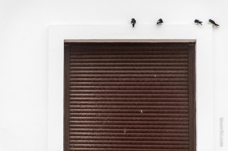 Golondrinas en el alféizar (Swallows on the window