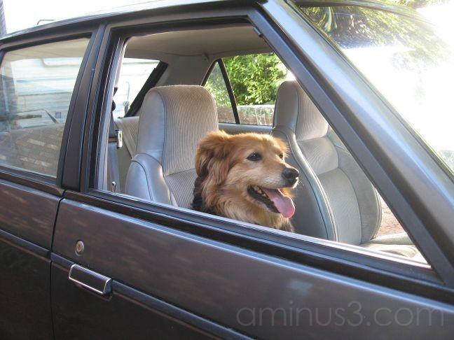 New Car, New Passenger