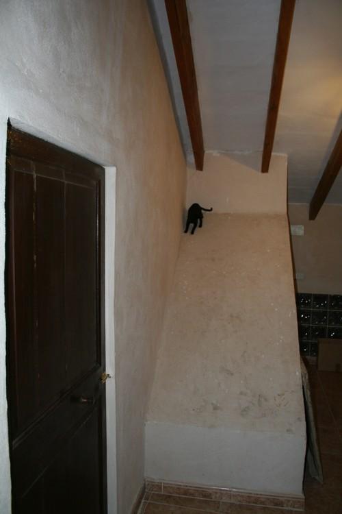 Spider-moix