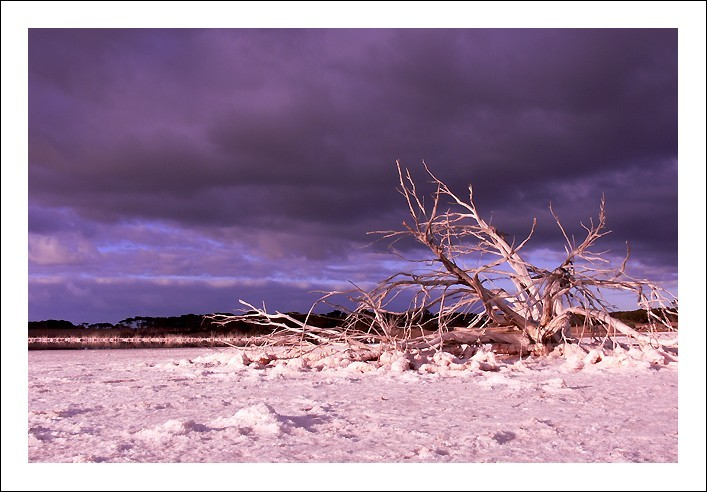 Dead tree on a lagoon on Kangaroo Island