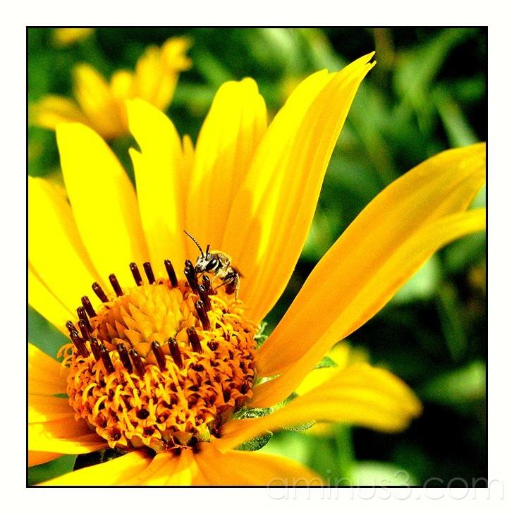 Macro photo of a Japanese bee