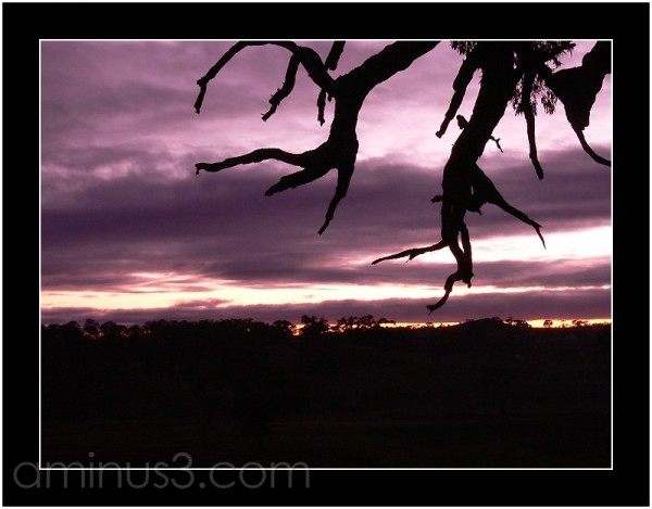Dawn in the Barossa Valley