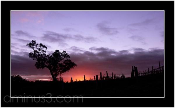 Sunrise in the Barossa Valley