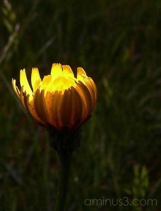 Daytime flash for macro nature shot
