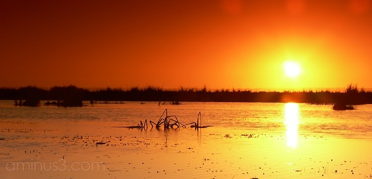 sunset at lake alexandrina
