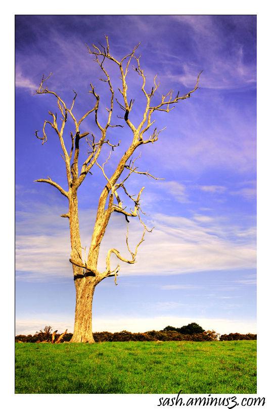 Sunrise at Willunga, South Australia