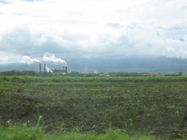 Island Industry