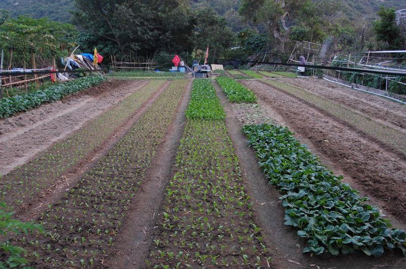 A farm on Lamma Island