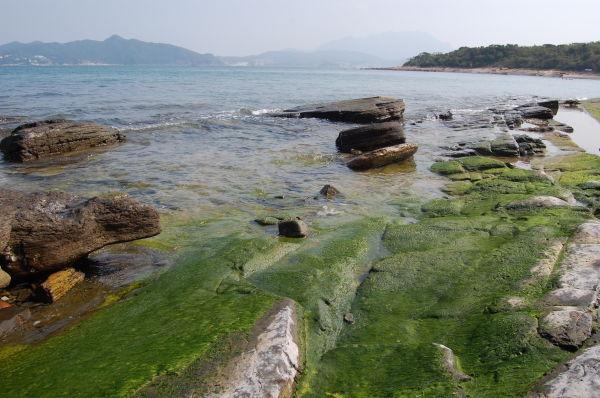 An algae deposit in a tidal pool on Ping Chau