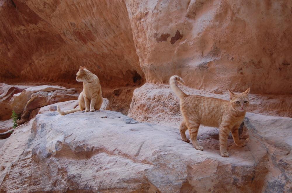 Cats blend in at Petra, Jordan