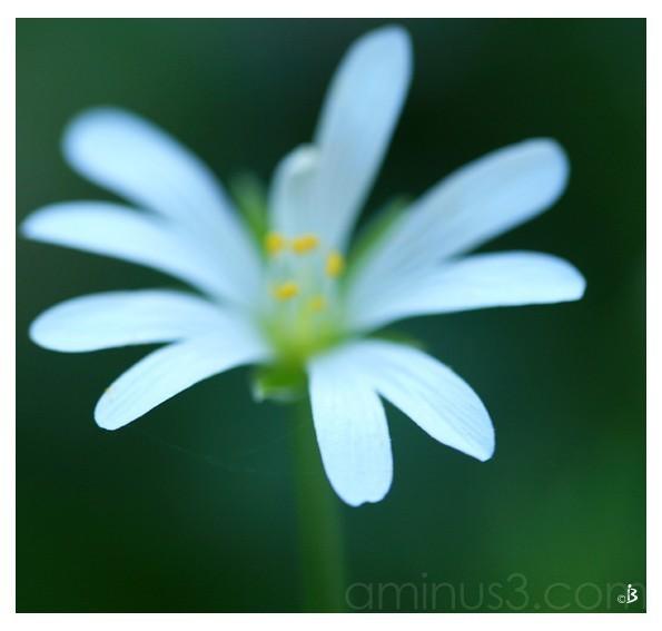 Compter fleurette