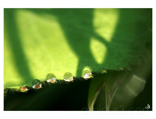 Drop drop drop ...