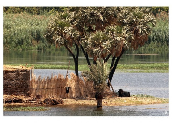 Les bords du Nil...