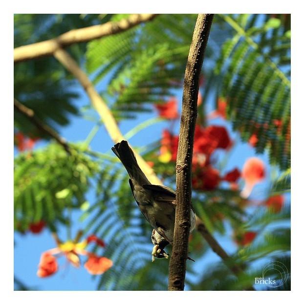 L'oiseau pêcheur