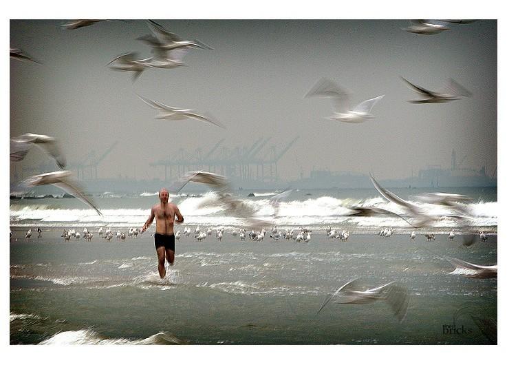 Voler dans la mer au milieu des oiseaux