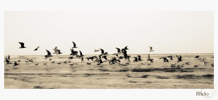 L'horizon a des ailes