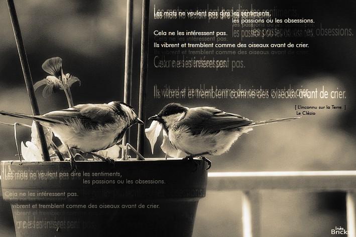 Comme des oiseaux