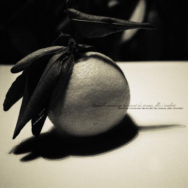 Quand les mandarines ...