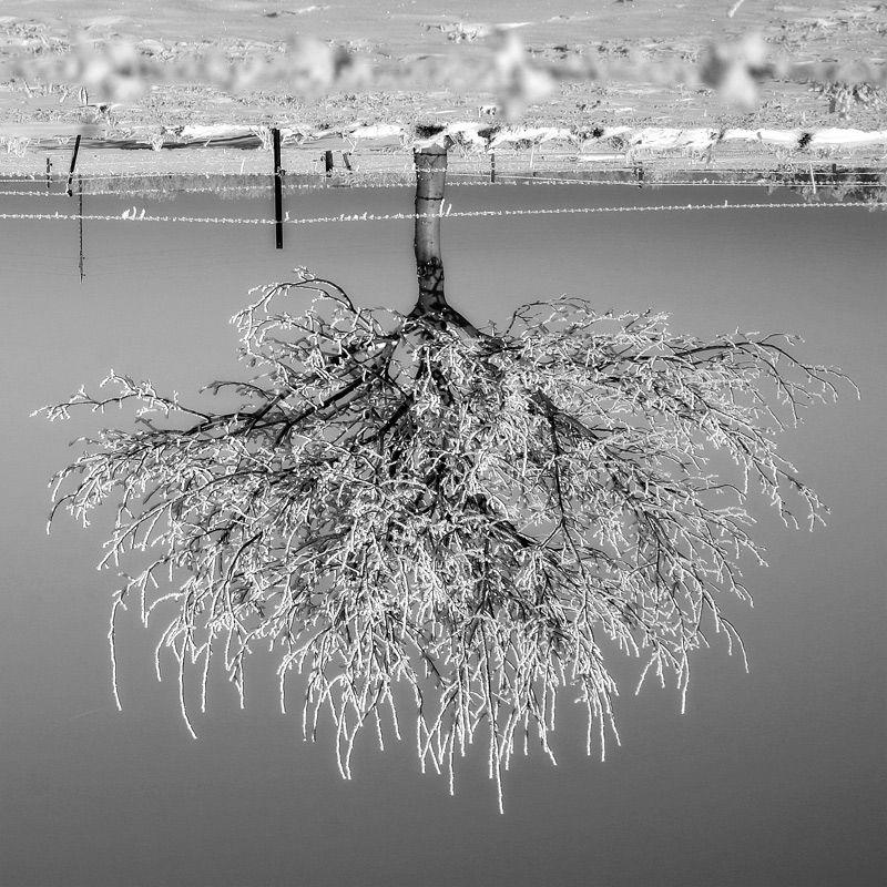 Ces racines sans ailes ...