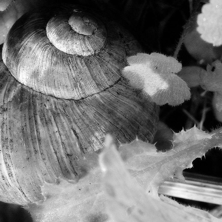 L'escargot turban