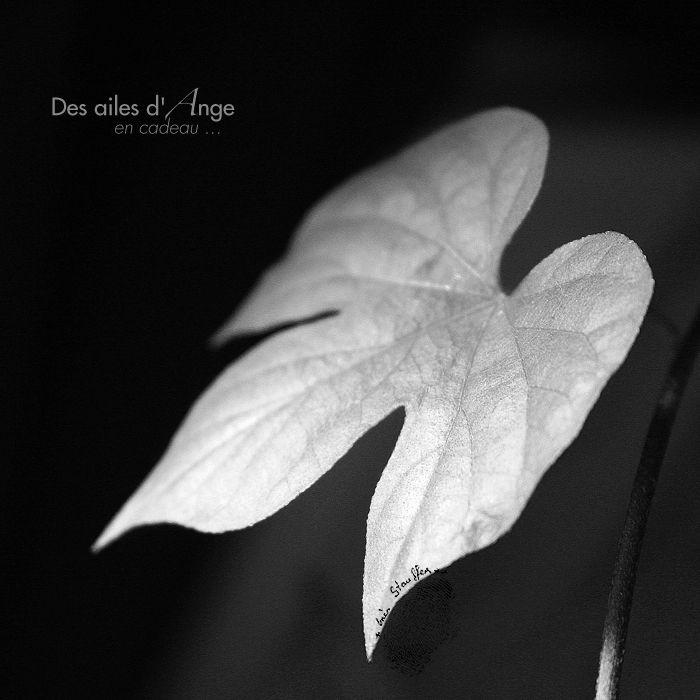 Des ailes d'Ange en cadeau