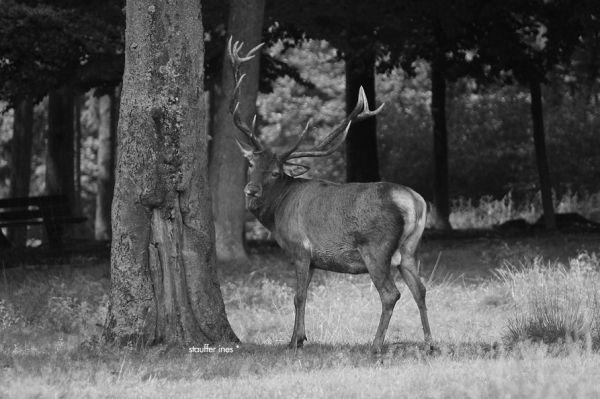L'arbre et l'animal *