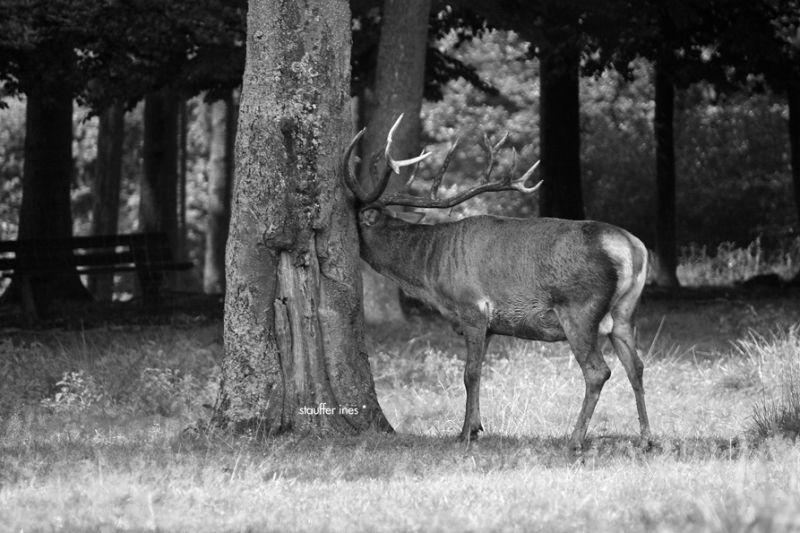 L'arbre et l'animal ****