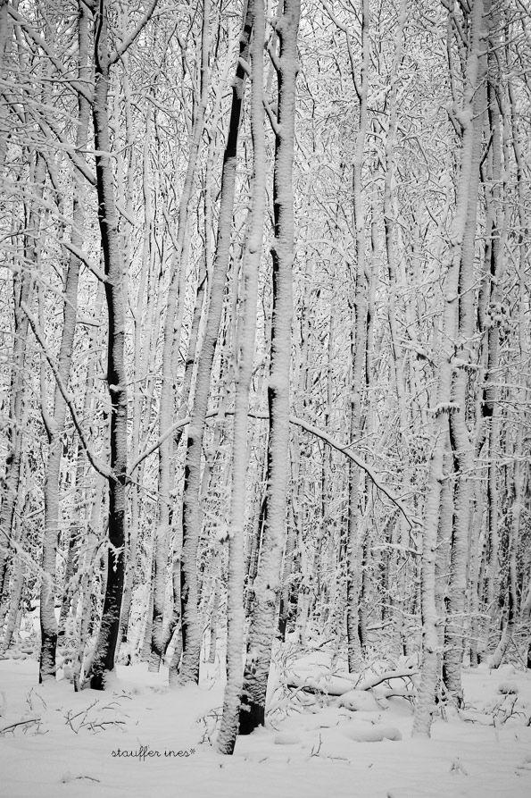 Dans la forêt lointaine ...