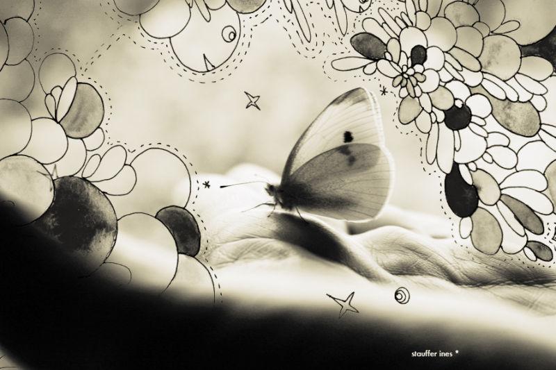 Quand les papillons auront des ailes ...