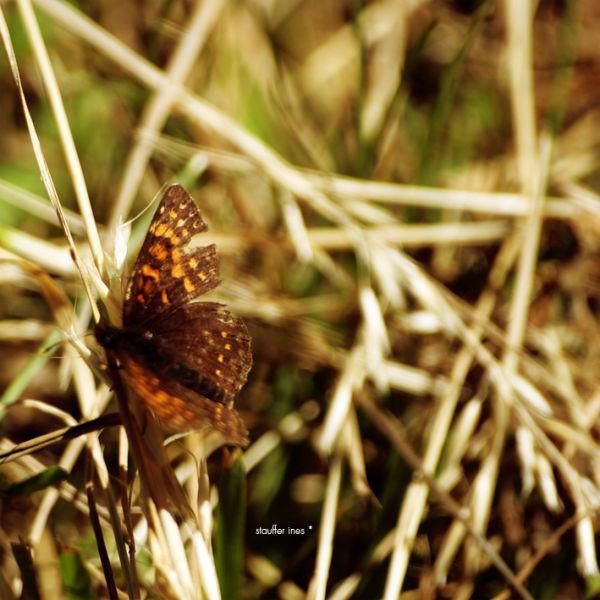 Brindilles et papillon