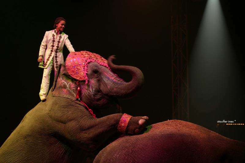 Sur le dos d'un éléphant !