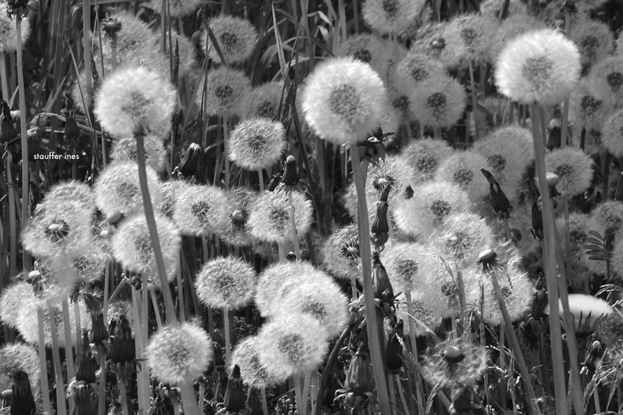 Le désir du vent ...