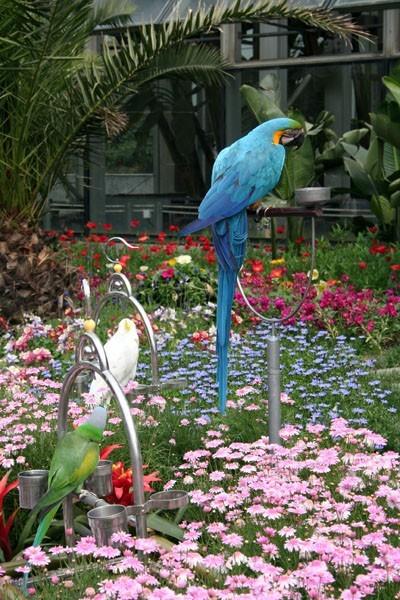 Tree Parakeets