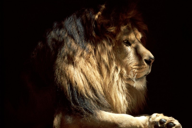 King of d jungle