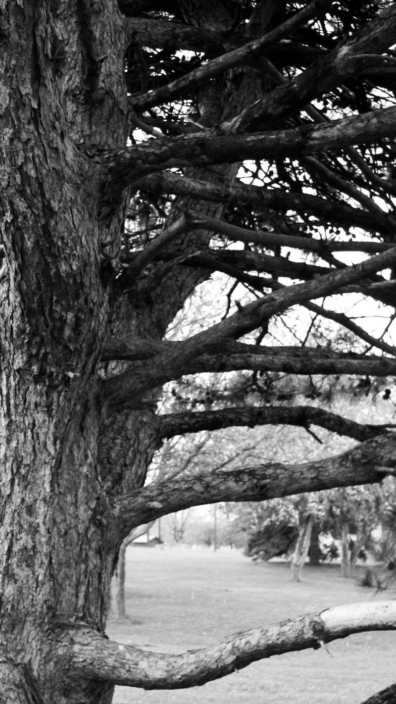Tree Limbs in black and white from Holmes Lake
