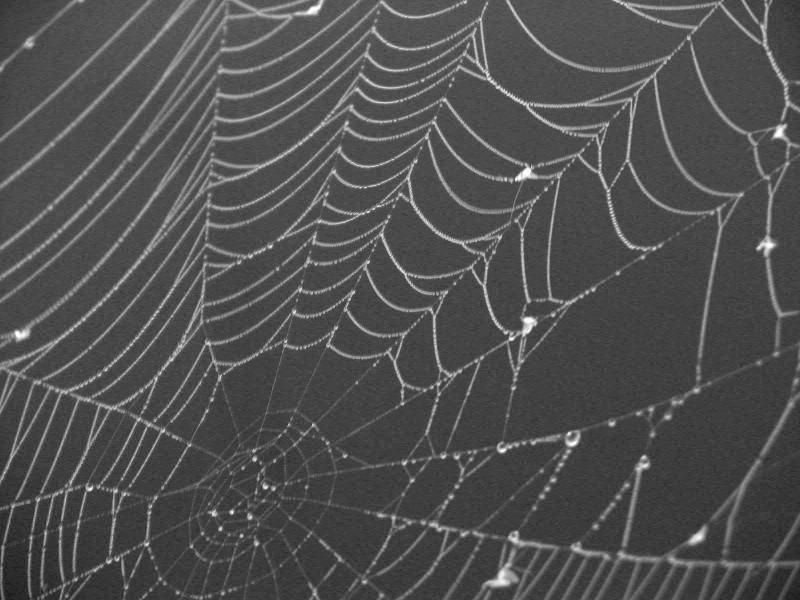 Spiderwebs 1