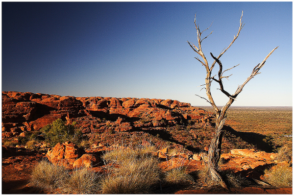 Outback 5: Dead Tree