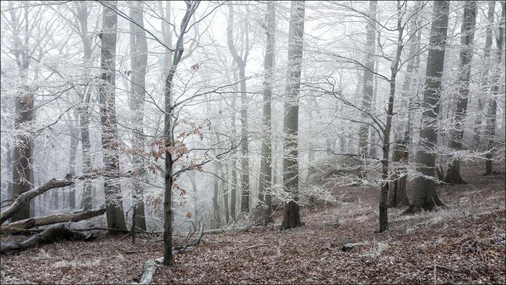 Frosty Kékestető