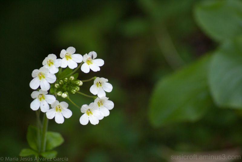 Conjunto de flores en círculo