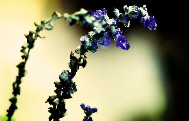 Blue Flowers in my mom