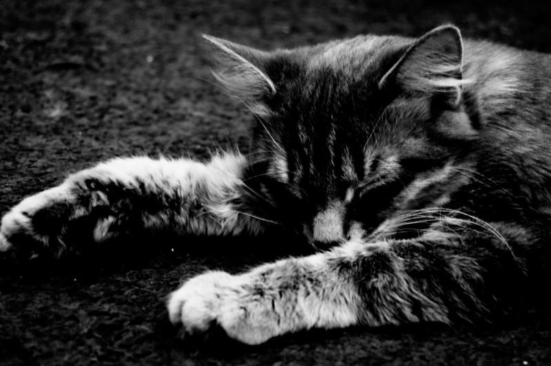 Always Sleeping