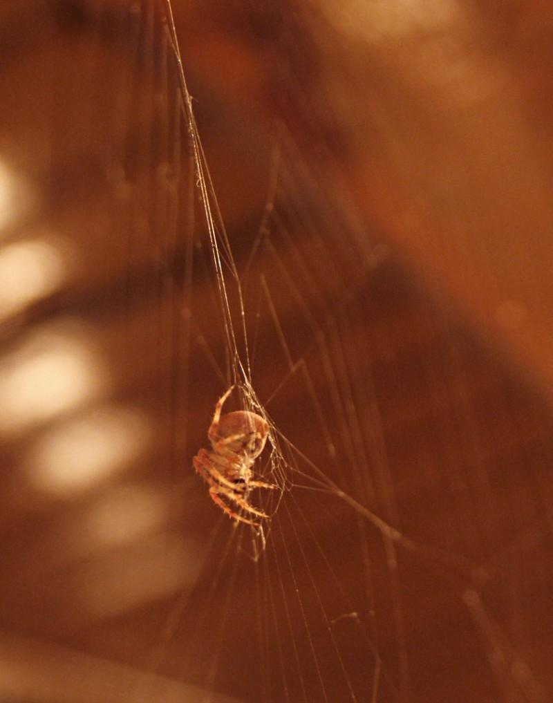 Spider : waiting