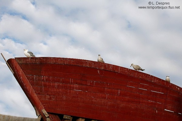 Red boat and birds in Essaouira, Morocco