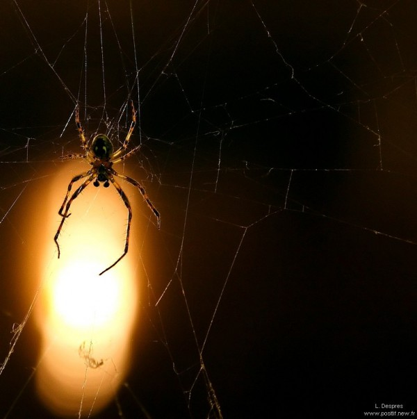 Spider macro by night
