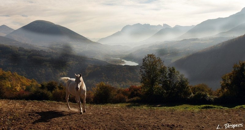 free white horse mountains