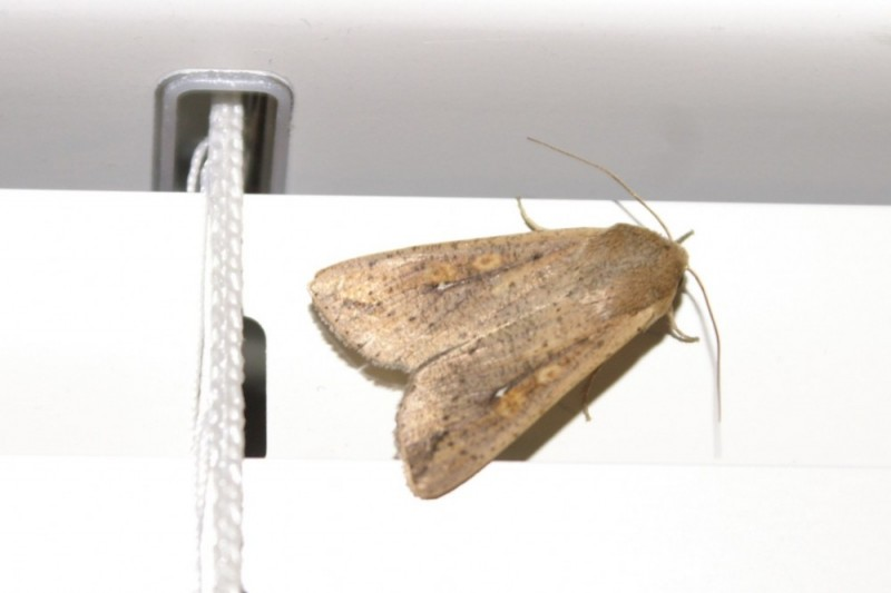 moth on window blinds