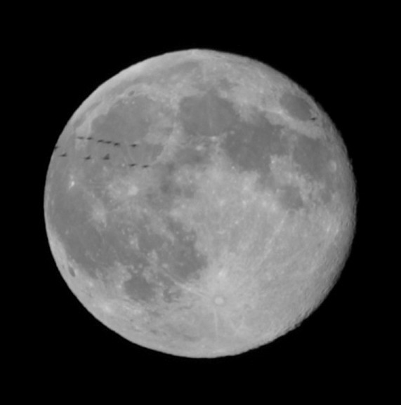 geese on the moon