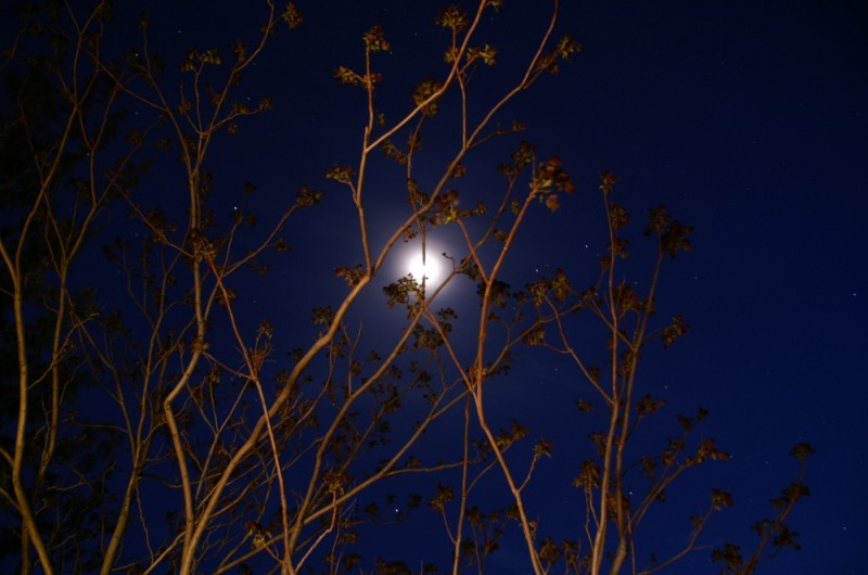 nocturnal branches