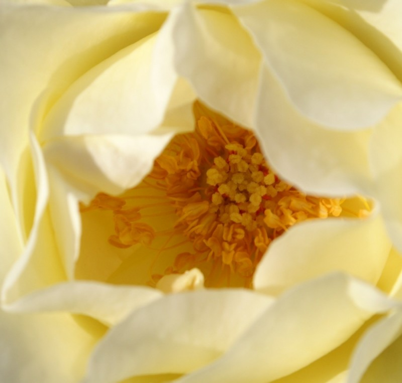 flower innards